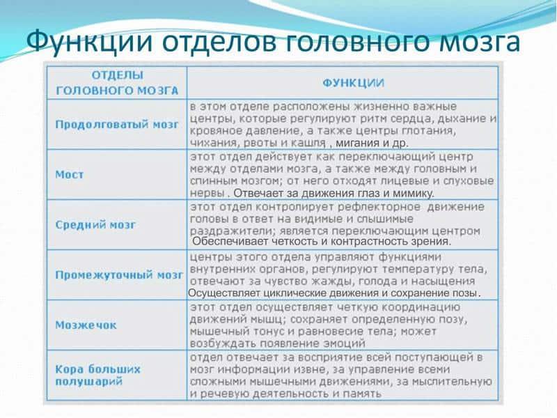 Таблица 1. Функции отделов мозга