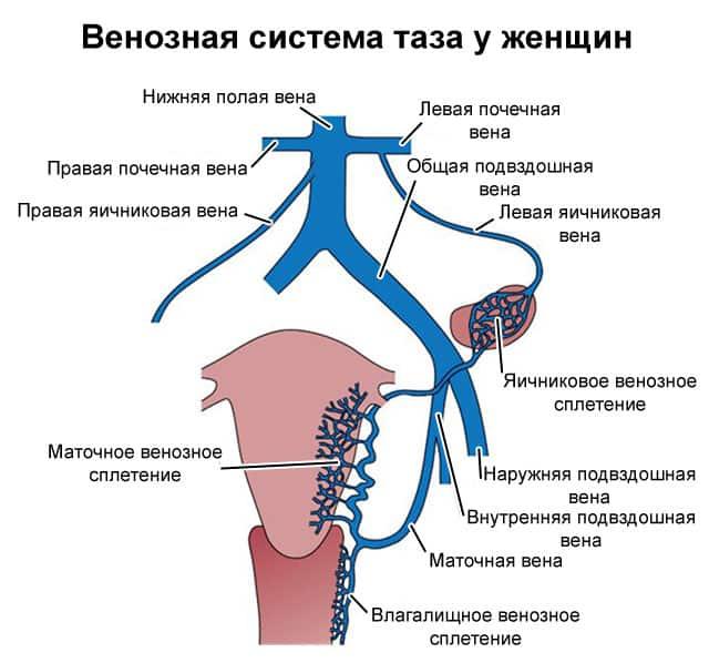 Симптомы и диагностика варикоза вульвы