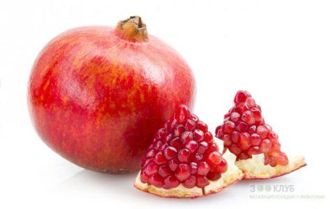 Можно есть не только свежий продукт, но и сок из ядер плода.