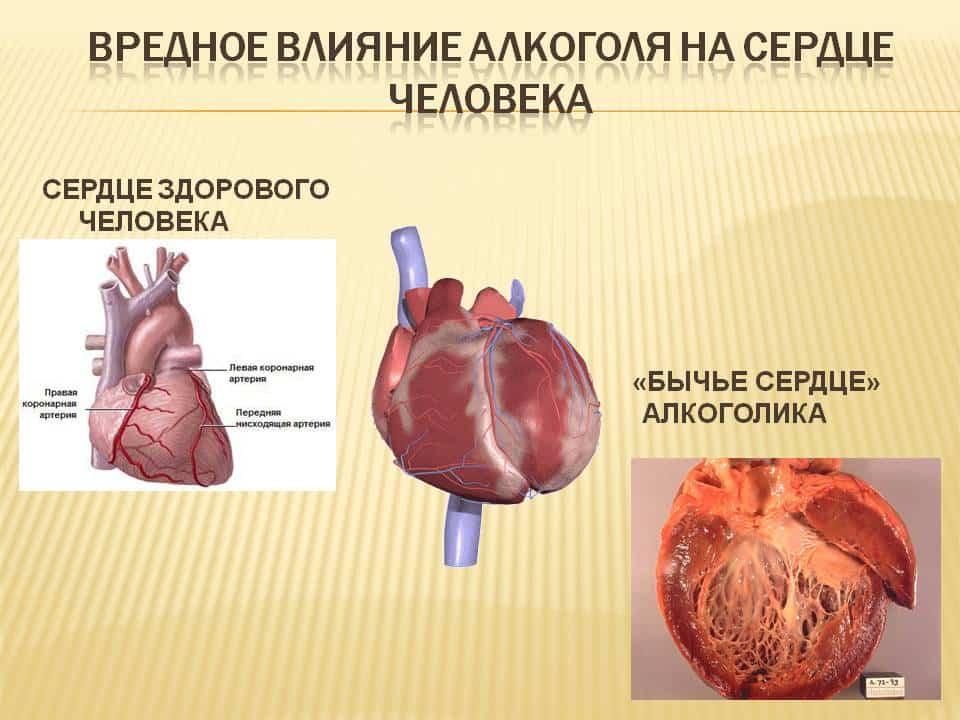 Влияние печени на сердце