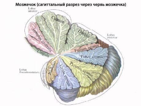 Мозжечковый