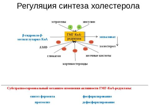 Статины снижают продукцию собственного холестерина клетками печени