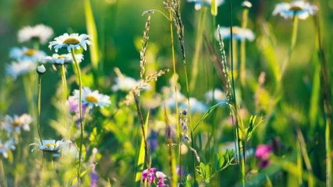 Все необходимое для здоровья человеку подарила природа.
