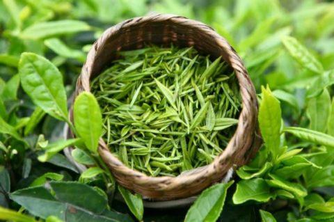 Богатый антиоксидантными веществами зеленый чай способствует укреплению сосудов и очищению всего организма от шлаков и токсинов.