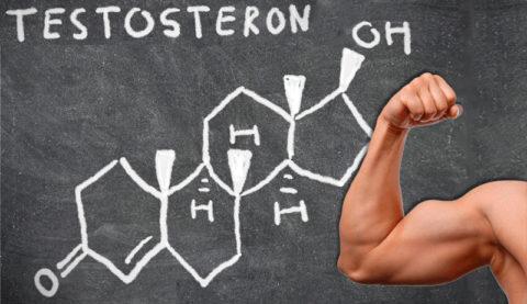Тестостерон - гормон мужественности