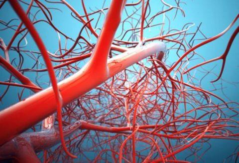 Почему поражение системы кровообращения опасно?