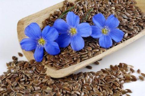 Семена льна – эффективное средство для стимуляции процессов кровообращения и улучшения функций пищеварительного тракта.
