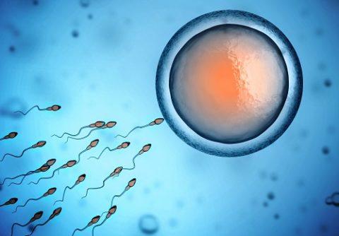 Сперматозоиды пытаются проникнуть в яйцеклетку