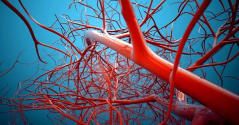 Улучшается кровообращение периферических тканей