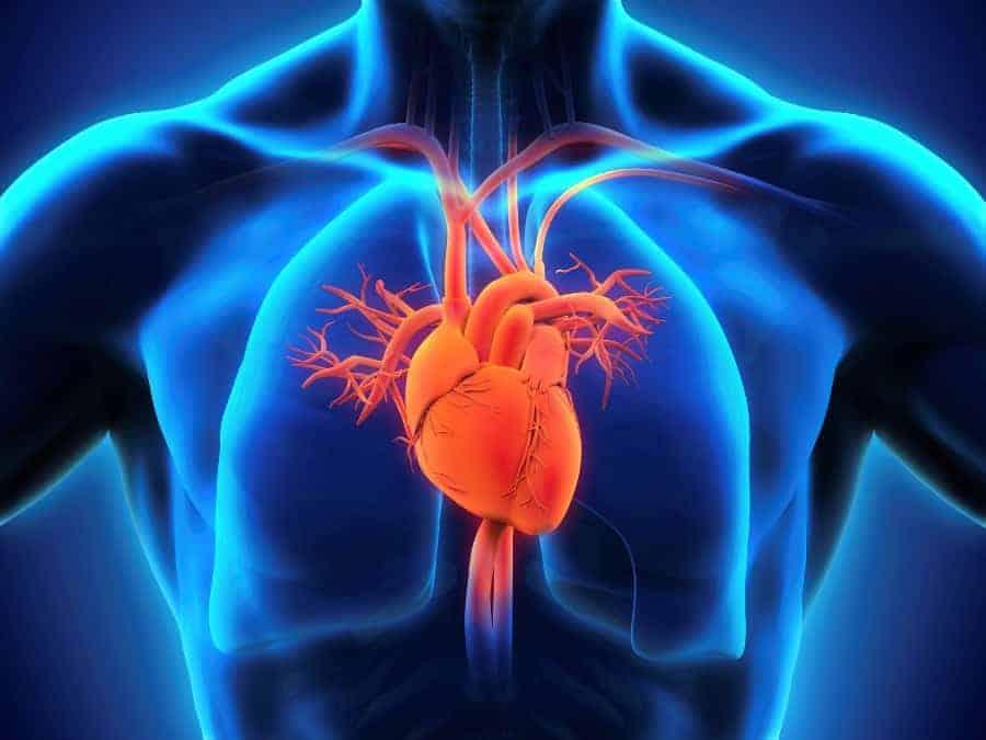 Сердце – мотор человеческого организма.