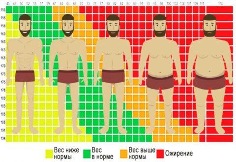 Действие алкоголя напрямую зависит от индекса массы тела