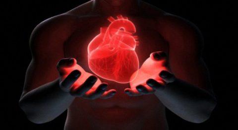 Кардиотренировки как метод профилактики патологий сердца.