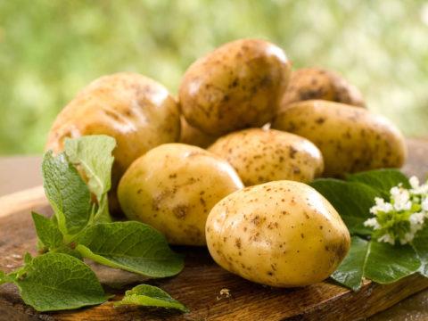 Картофель – не только вкус, но и польза.
