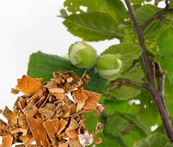 Кора и листья лещины как сосудорасширяющий состав.