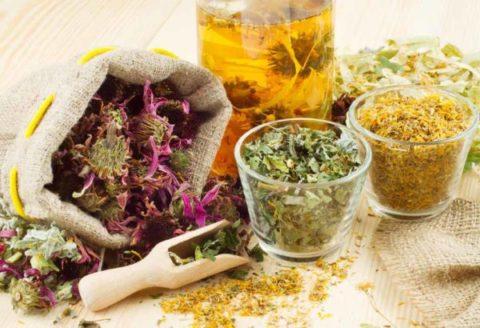 Лекарственные травы особенно полезны для укрепления сосудов и сердечной мышцы.