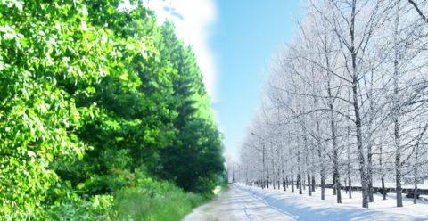 Из зимы в лето и наоборот.