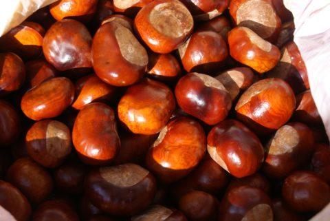 Заготовленные плоды конского каштана
