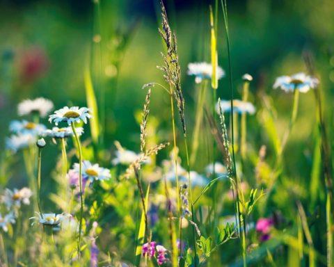 Какие травы можно использовать для лекарственных примочек.