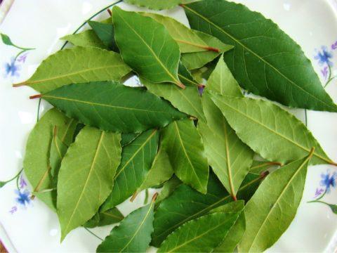 Лавровый лист (на фото) – одно из универсальных средств для лечения болезней сосудов.