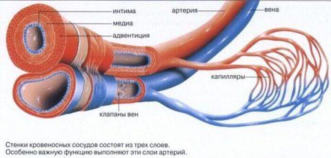 При васкулите нарушается нормальное кровообращение