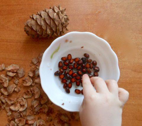 Свежие очищенные сырые орешки – самые полезные
