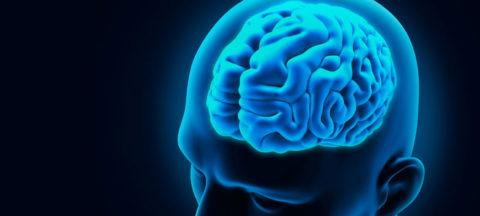 Здоровье сосудов мозга: как сохранить и предотвратить спазм.