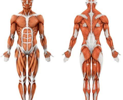 Организм человека состоит на 80% из белковых молекул