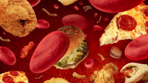 Откуда пища в кровотоке