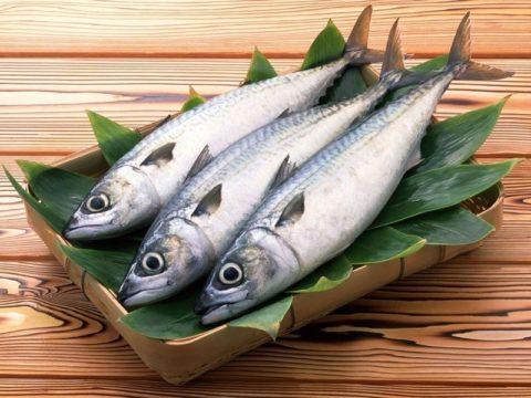 Рыба должна присутствовать в рационе.