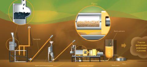 Технология изготовления подсолнечного масла методом прессования