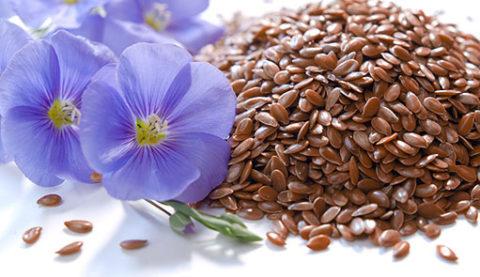 Цветок и семена льна