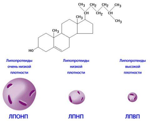 Химическая формула и виды холестерола