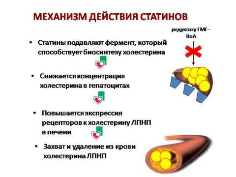 Принцип работы статинов