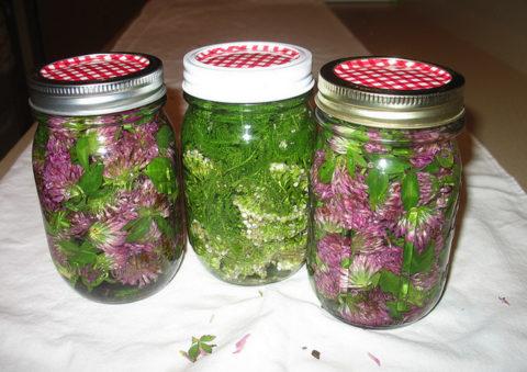 Свежие цветки клевера, залитые спиртом