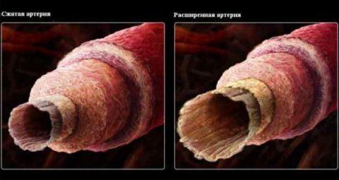 Водка может как расширять, так и сужать кровеносные сосуды