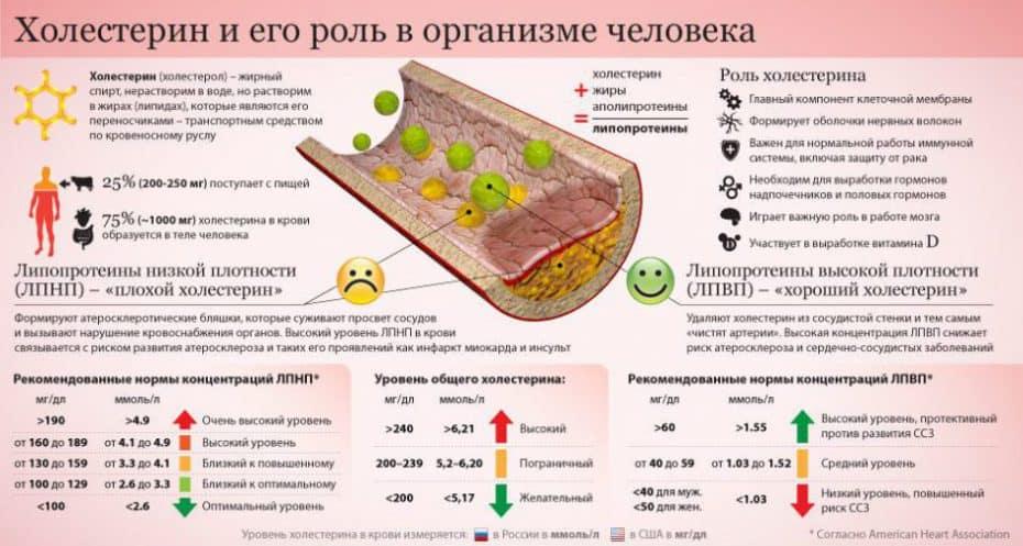 Функции холестерола (холестерина)